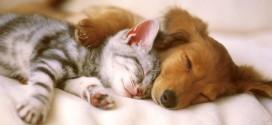 Concorso Royal Canin: Vinci un soggiorno pet friendly