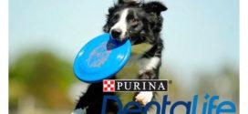 Vinci frisbee Dentalife