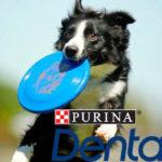 Dentalife Frisbee